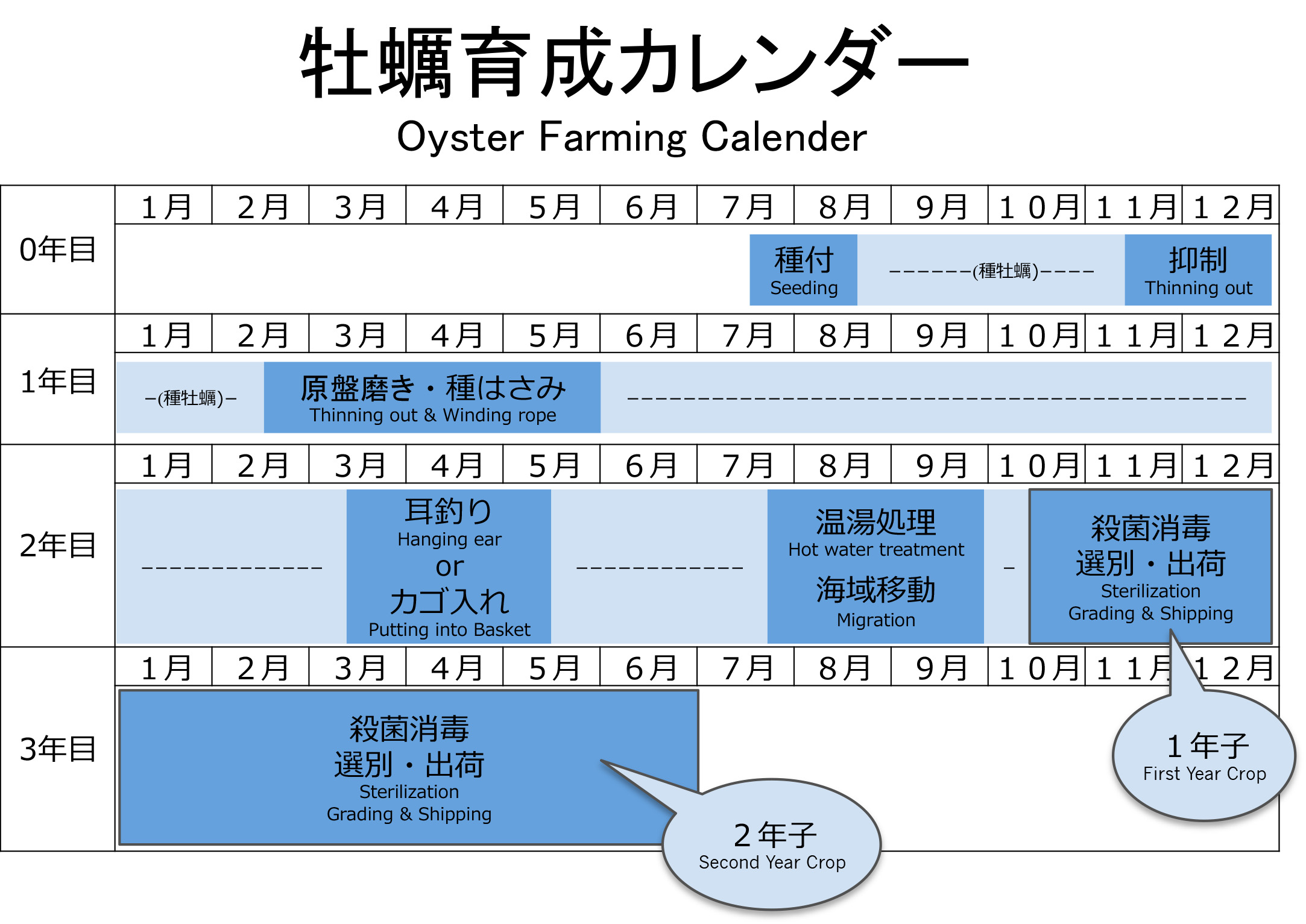 oyster_calender