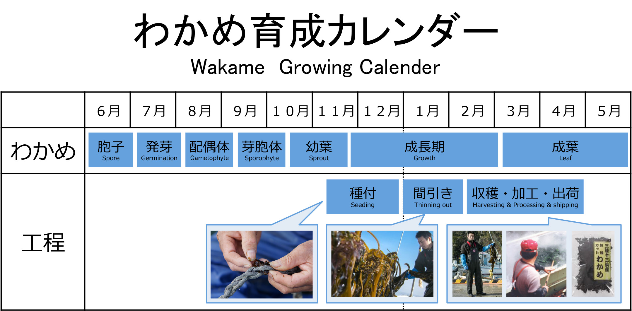 wakame_calender